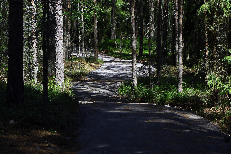 """""""Pimeä metsä"""" -Susisuolla"""