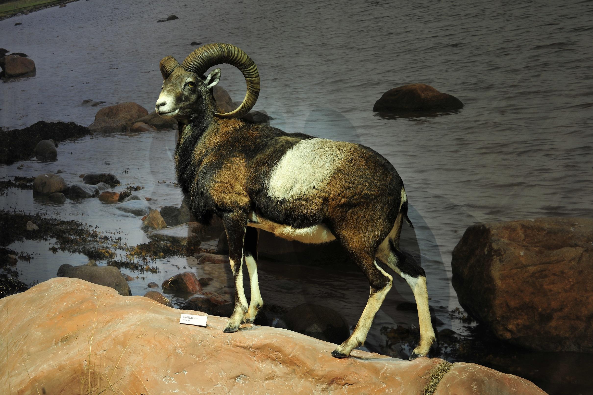 Luontotalo Arkin kulttuuri-iltapäivä vanhustenviikolla