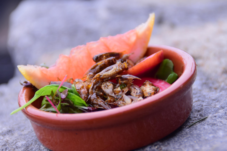 Hyönteisruokapäivä